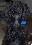 Elijah as a Puppy