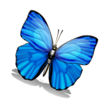 butterflyPicture4