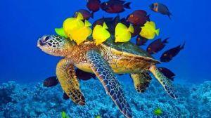 ShellandFish-960x540