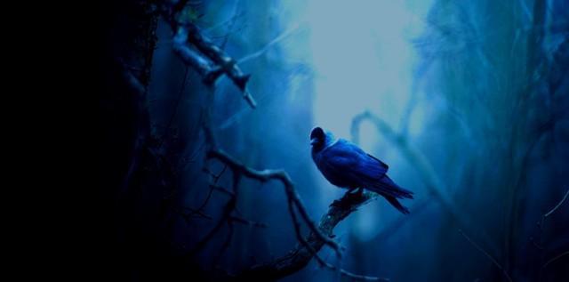Jyrki Salmi - Jackdaw Alder Grove