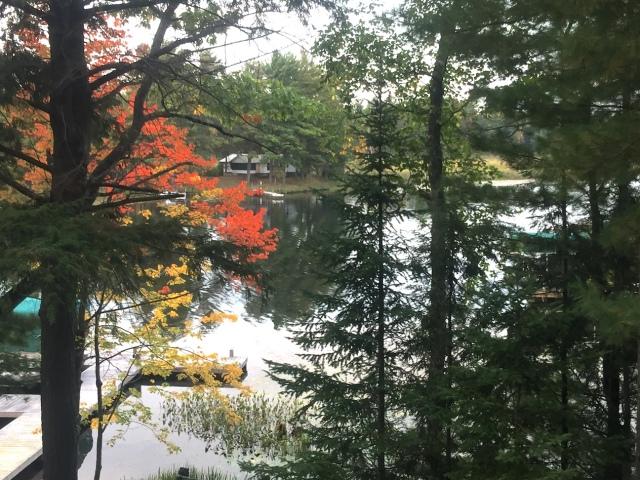 My favorite fall maple tree.JPG