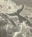 FMIB_43693_Whale_Capsizing_a_Boat