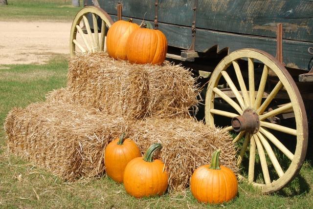 pumpkins-1572854_960_720