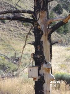 New bird house on burned tree